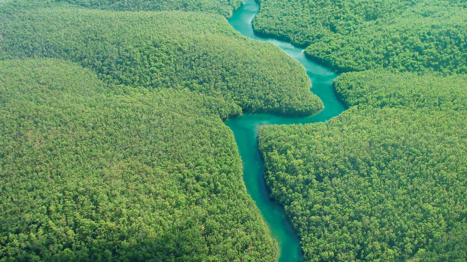 Birdseye view of dark green forest and sparkling blue water.